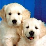 Juego de cuidar perritos