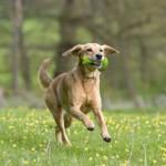 Juego de lanzar el hueso a un perro