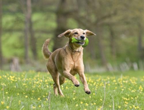 perro corriendo juguete