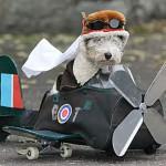 Volar en avion con el perro piloto