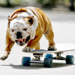 Juego de skateboard con perros