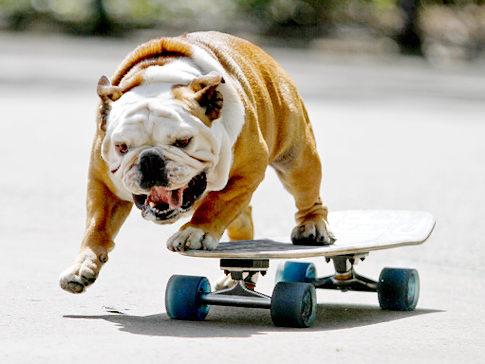 perro-skateboard