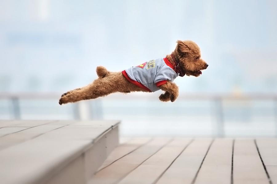perro volador