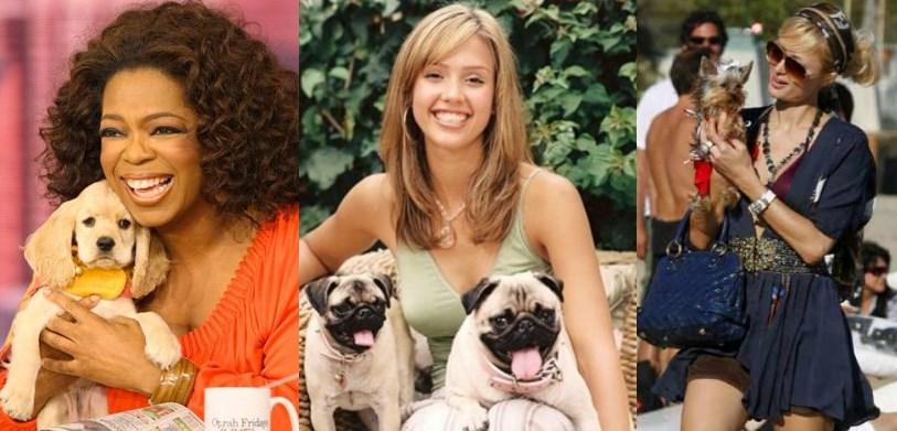 perros celebrities