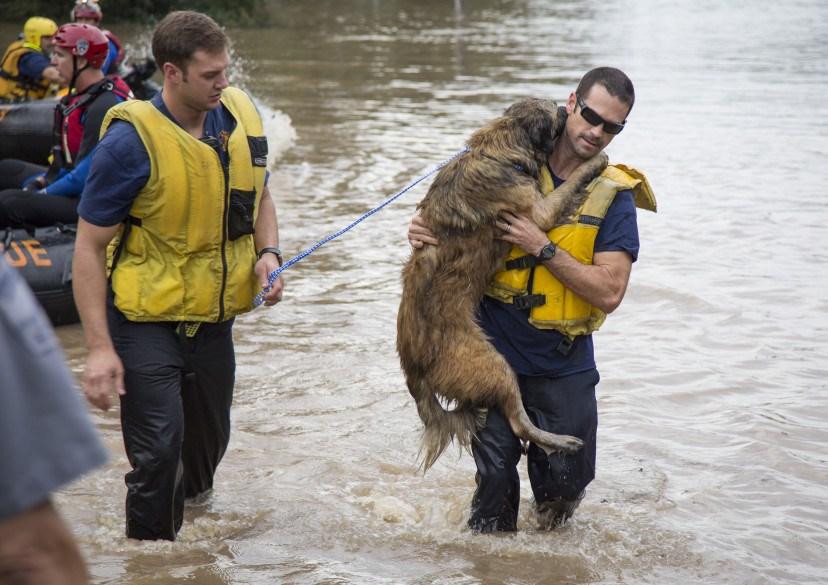 rescatar perros