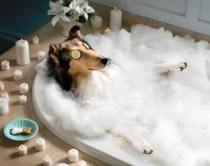 spa perro