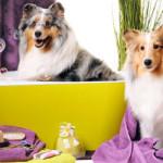 Juego de lavar, peinar y arreglar mascotas