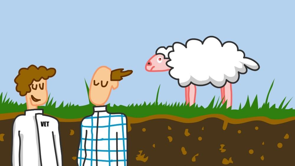 En la mente de una oveja 02