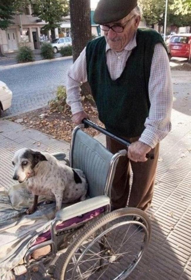hombre perra silla ruedas