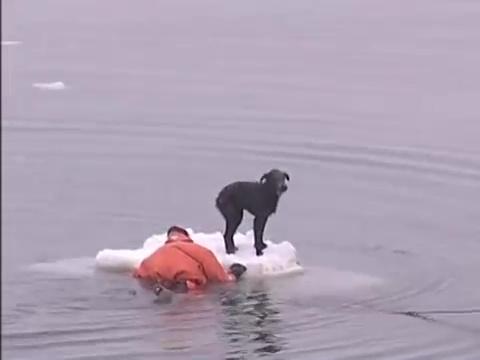 perro rescatado hielo