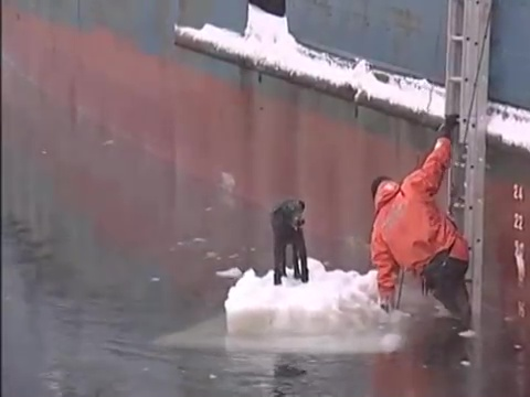 perro rescatado iceberg