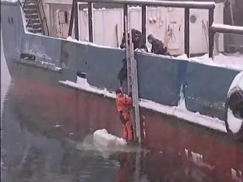 perro rescatado mar