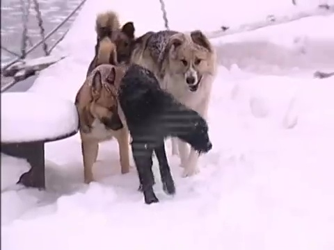 perro rescate hielo