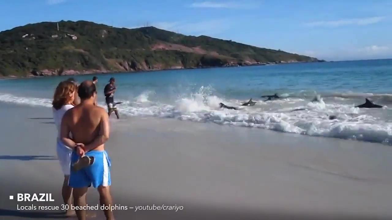 rescates animales delfines