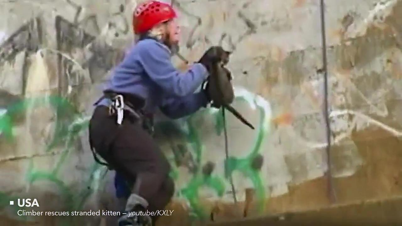rescates animales gato