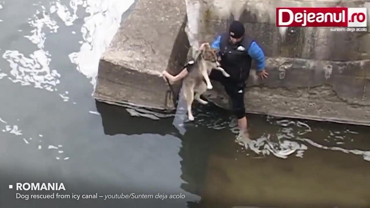 rescates animales perro rio