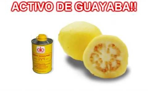 activo guayaba