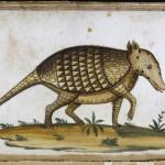 La búsqueda de medicinas en la España del siglo XVI