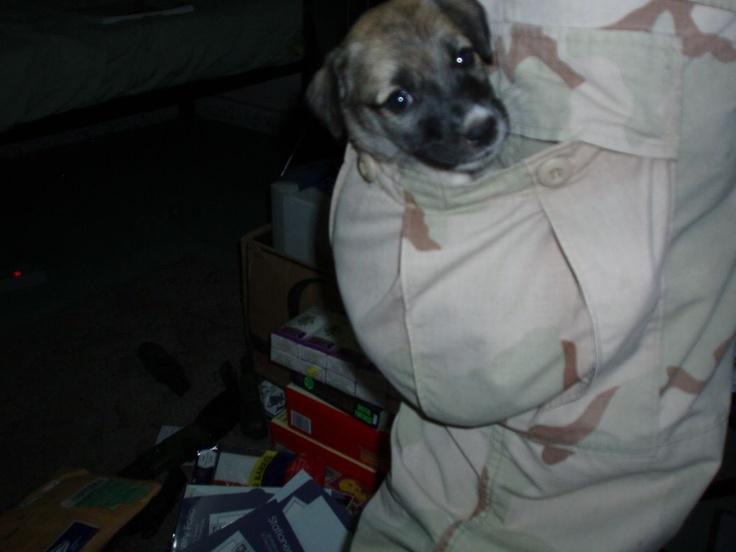 cachorro grace salvado