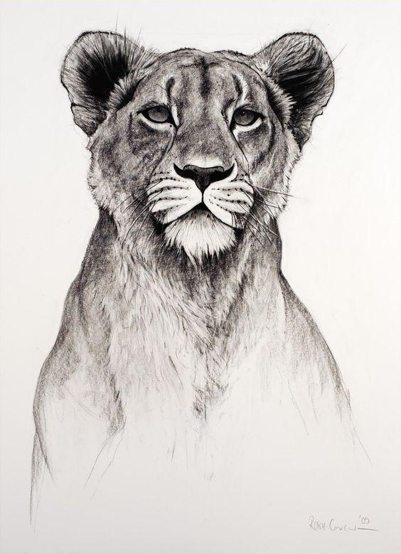 dbujo leona