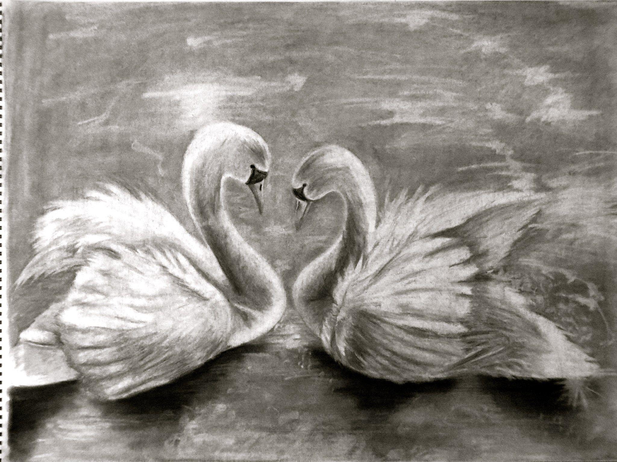 dibujo carboncillo cisnes