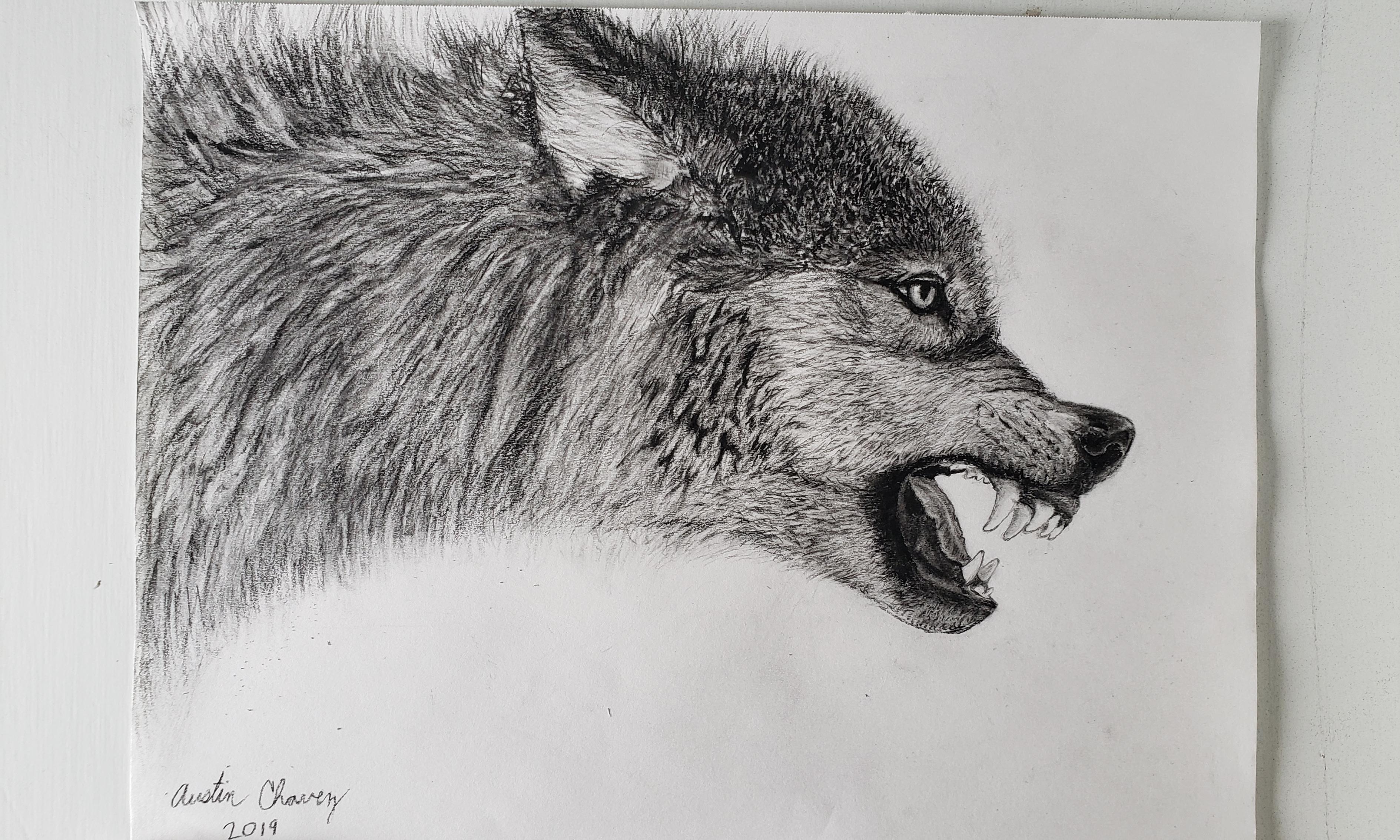 dibujo carboncillo lobo