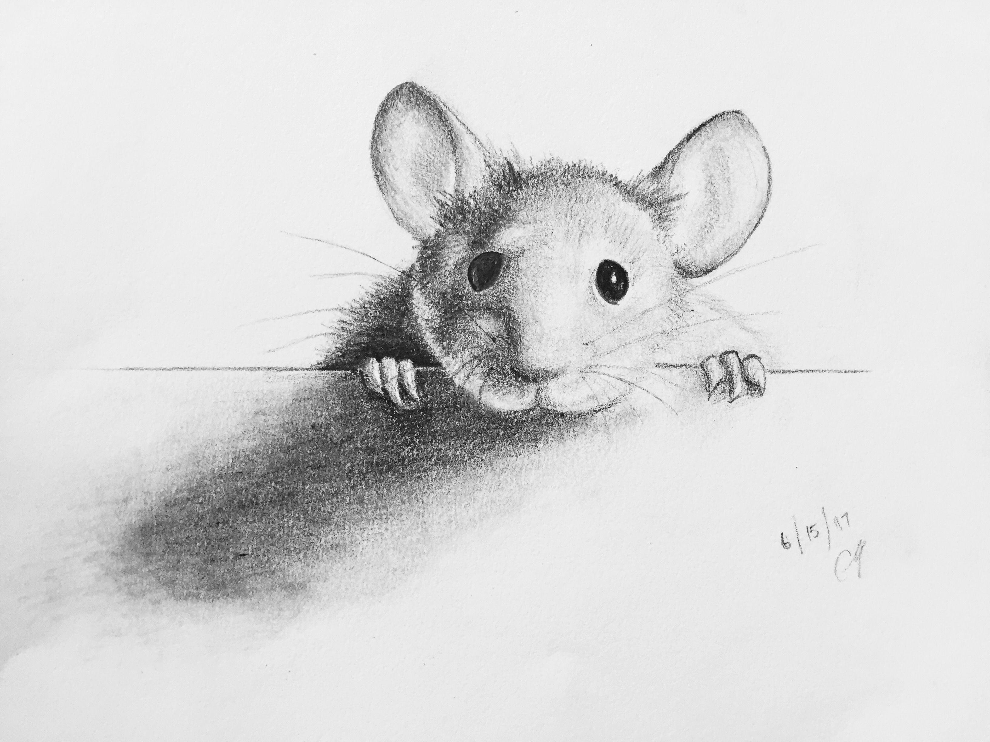 dibujo carboncillo ratoncito