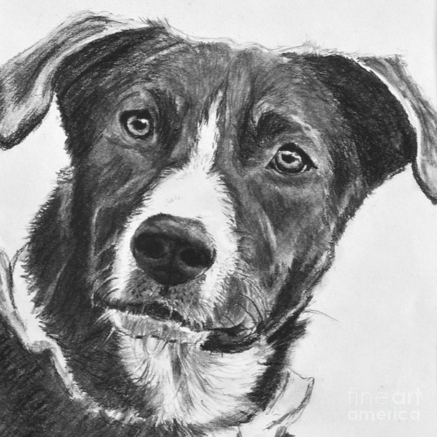 dibujo perro pastor
