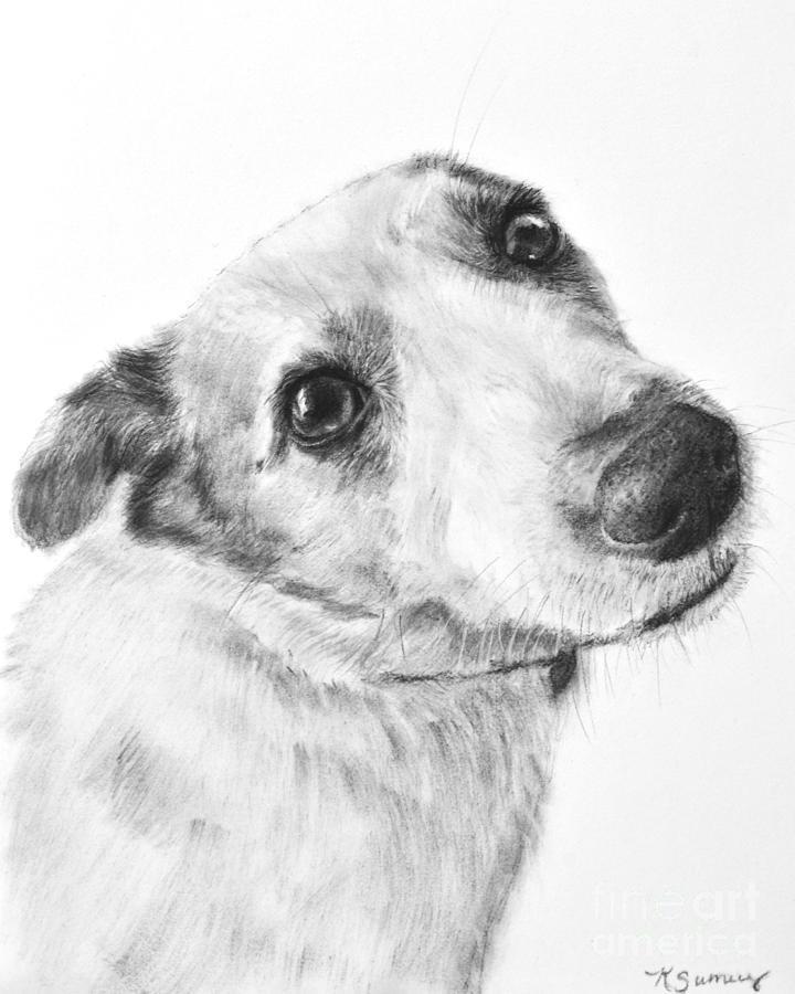 dibujo terrier jack russel
