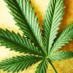 Cannabis Medicinal en España y el Mundo