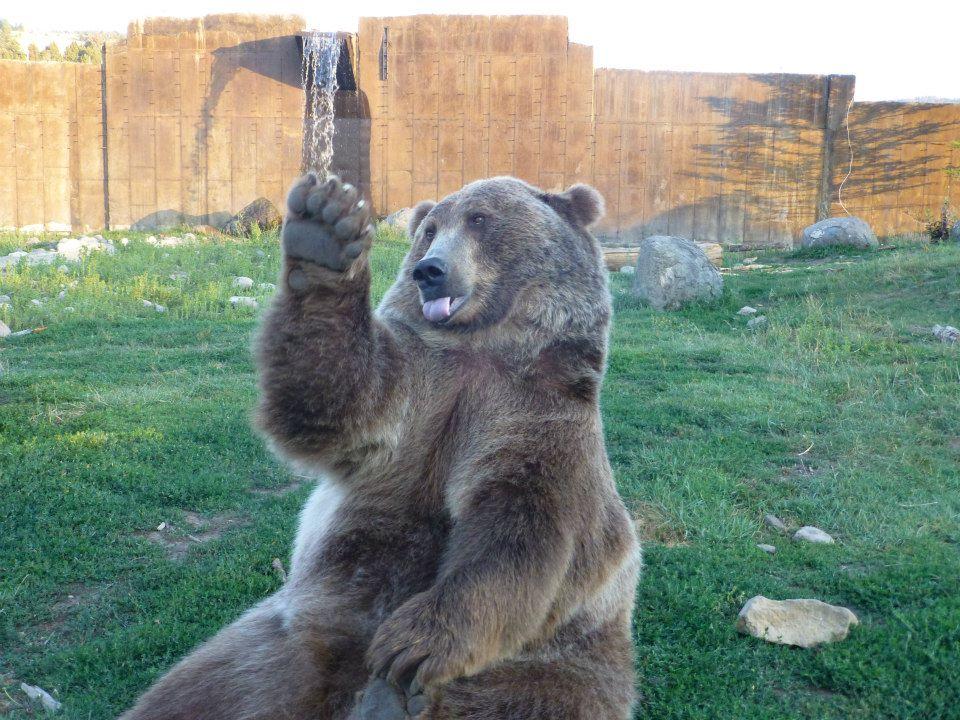 oso hola