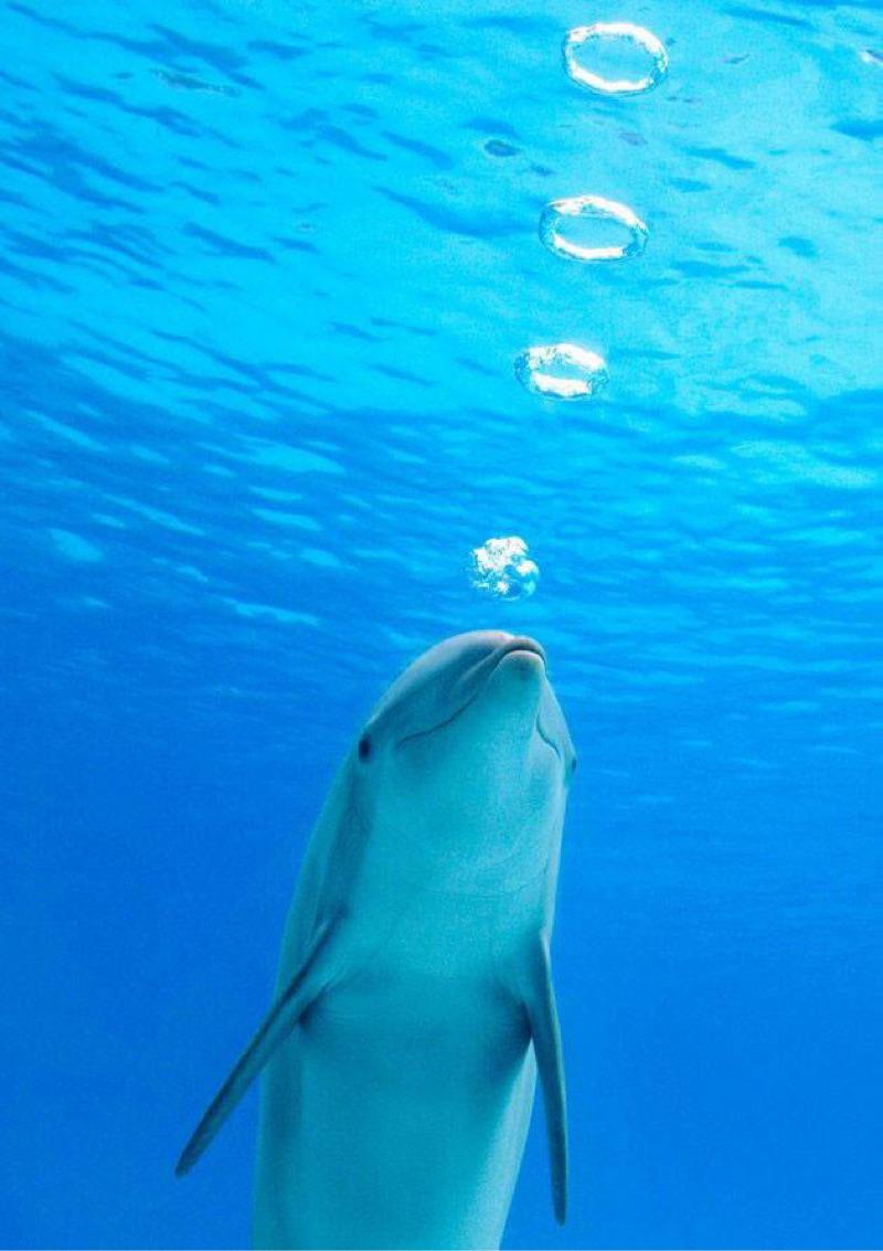 delfin jugando burbujas