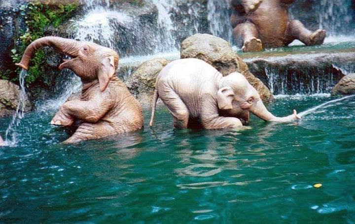 elefantes jugando agua