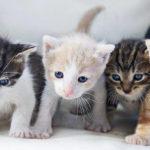 30 curiosidades sobre los gatos