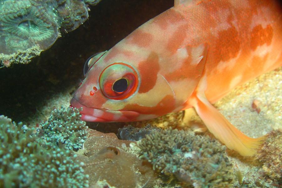 pez oceano