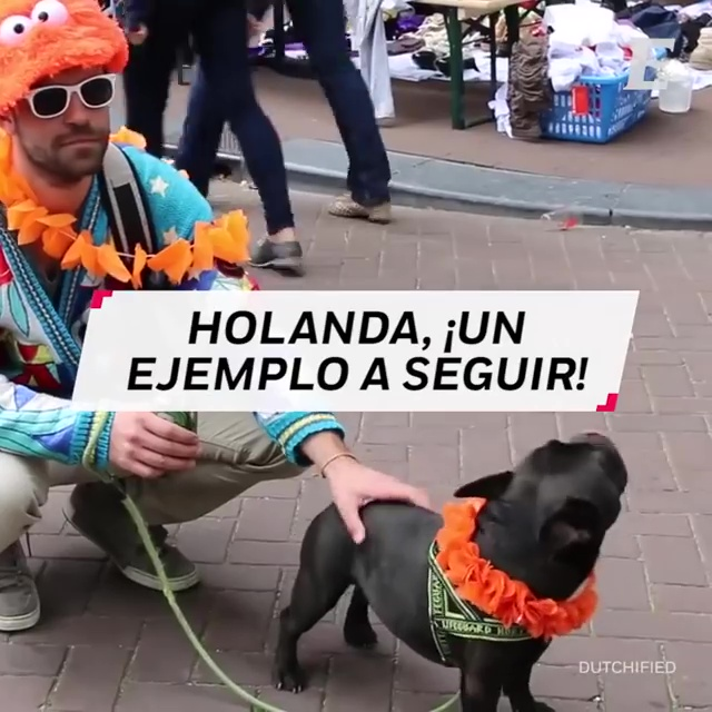 holanda perros