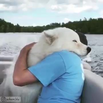 animales abrazando humanos 03