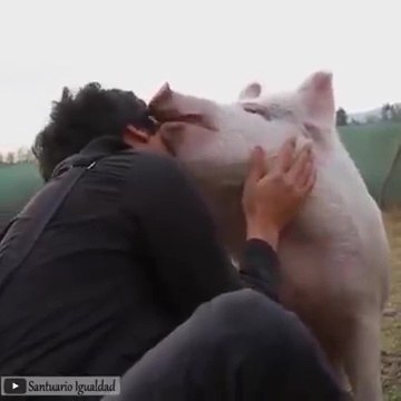 animales abrazando humanos 04