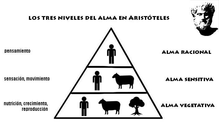 aristoteles alma
