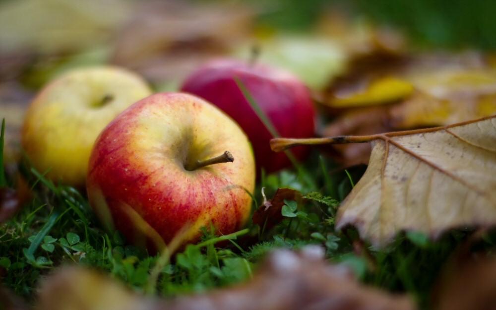 manzanas suelo