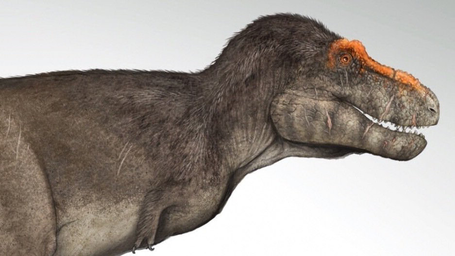 Tyrannosaurio pelo