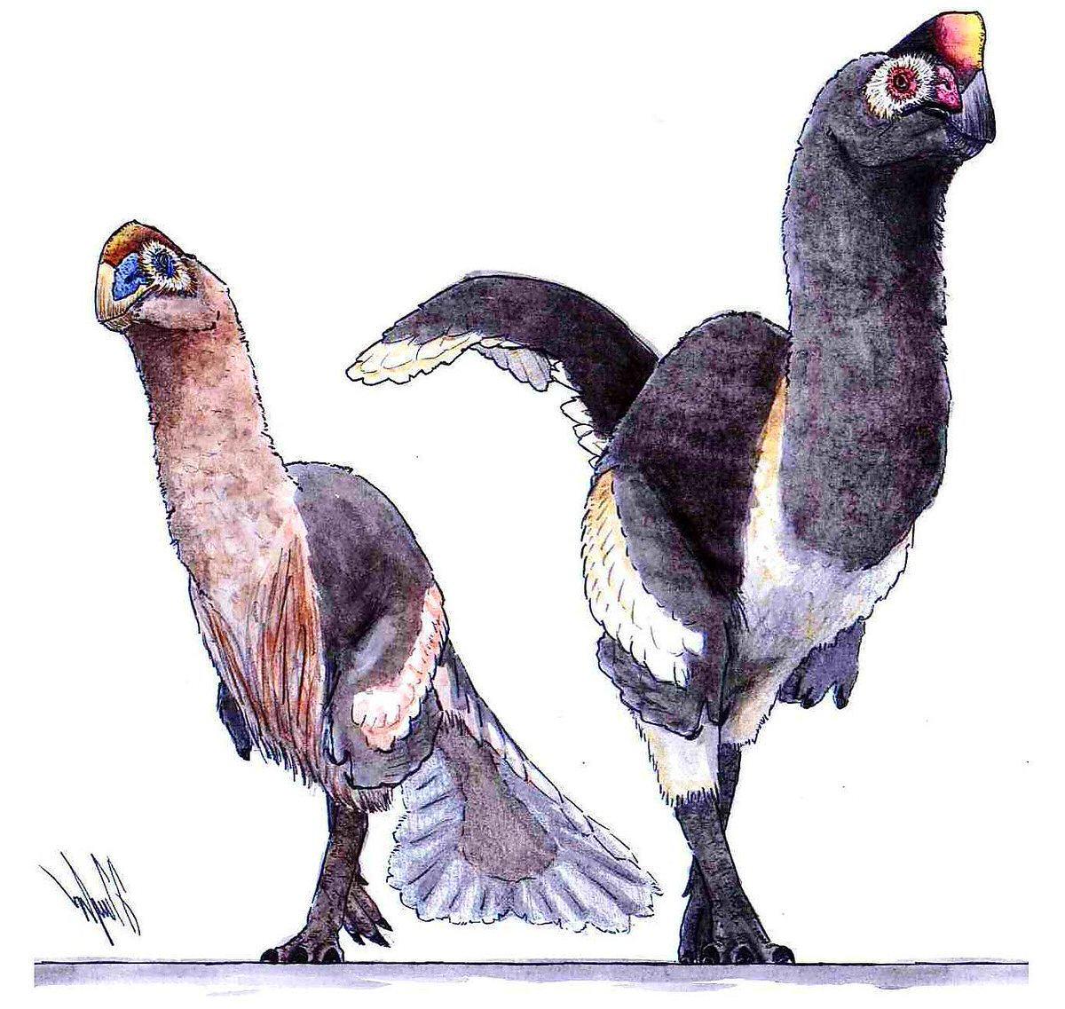 dinosaurios plumas complejas