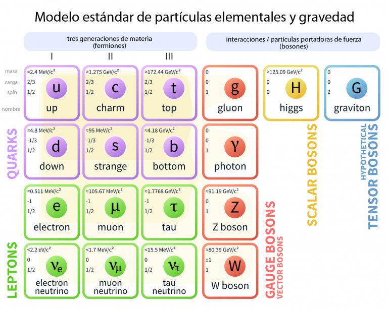 espin boson fermion lepton quark