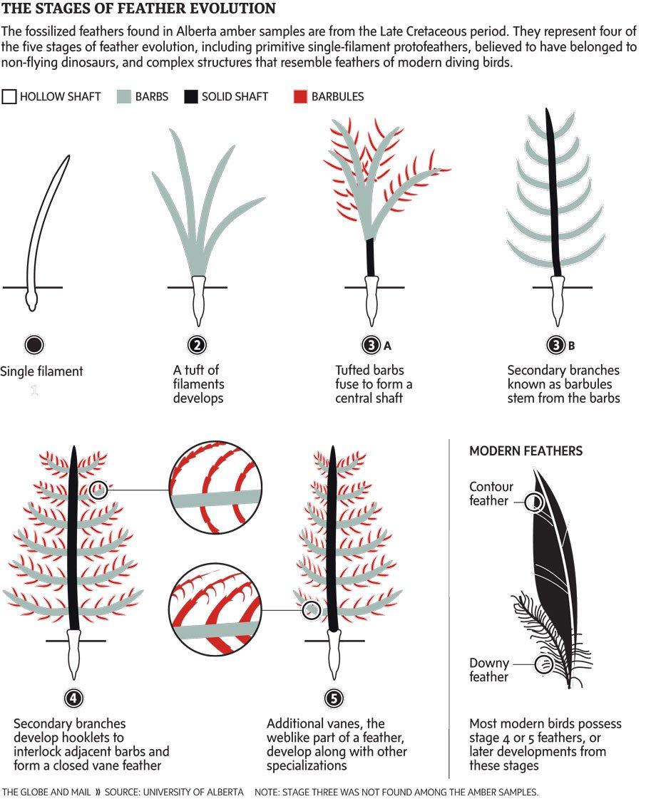 estructura plumas