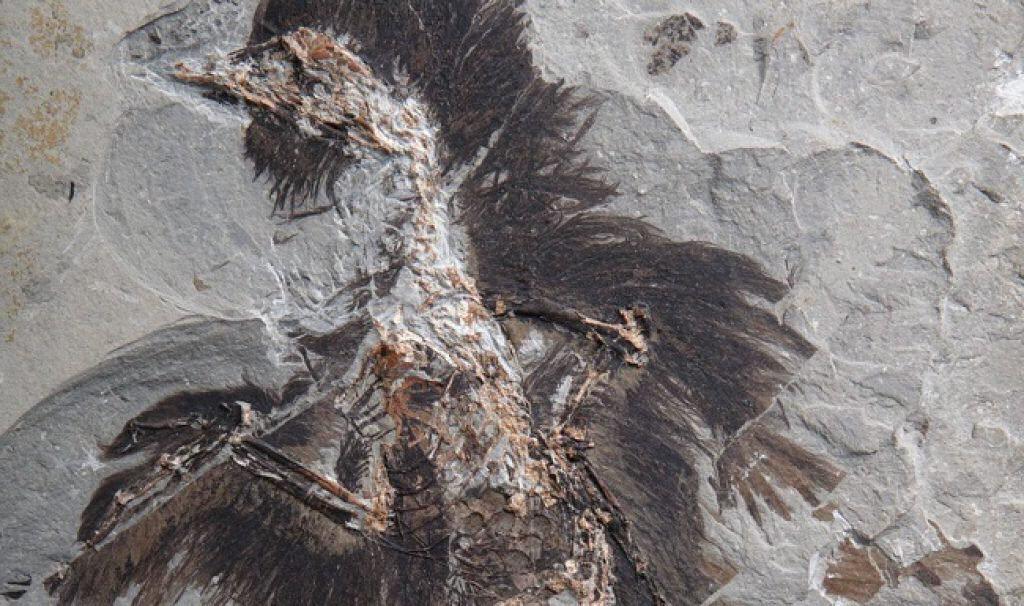 fosiles plumas