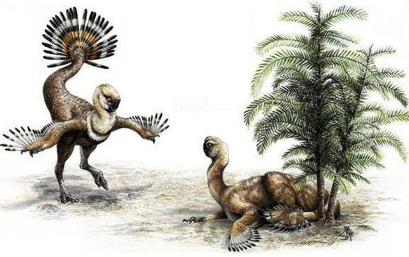 oviraptores plumas