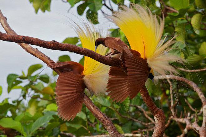 plumas seleccion