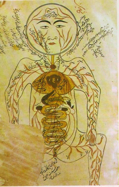 islam medicina avicena canon