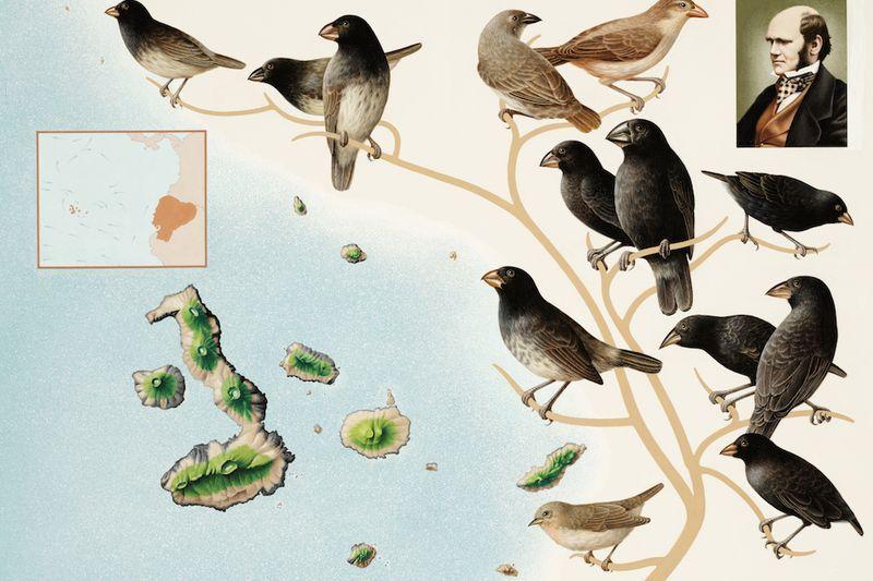 darwin galapagos aves