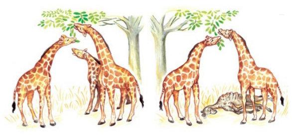 evolution jirafas